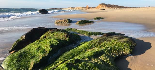 beach view by jan