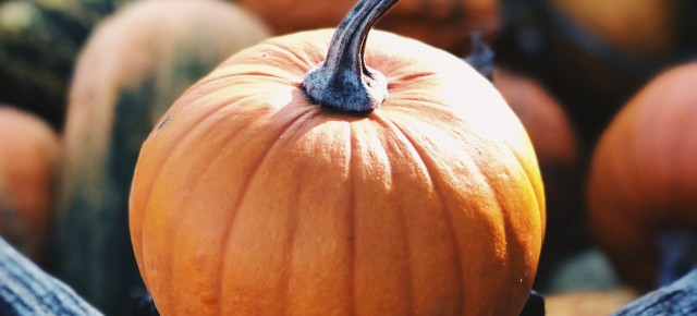 close up of a pumpkin