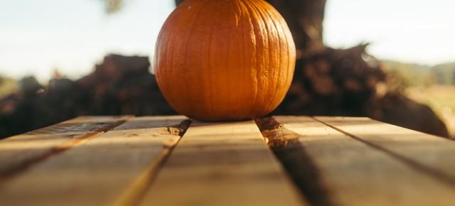 a single pumpkin