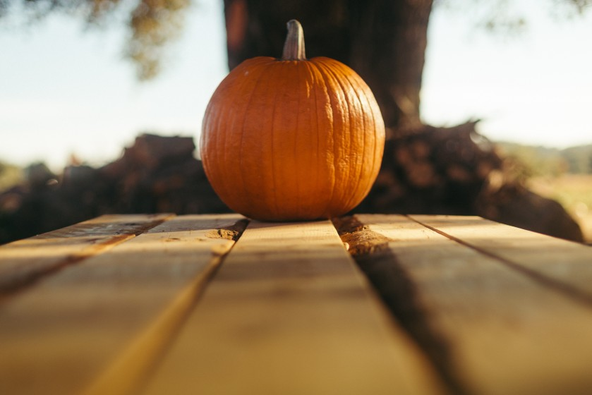 a single pumpkin
